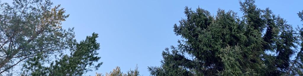 Olika träd och blå himmel